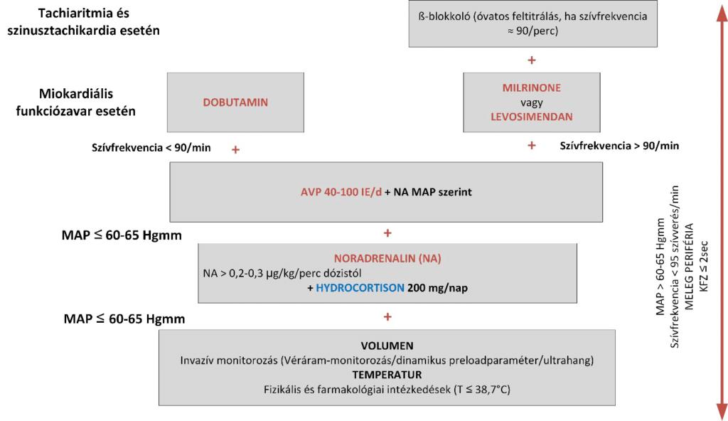 Intenzív terápiás folyamtábra: hemodinamika terápia SARS-CoV-2