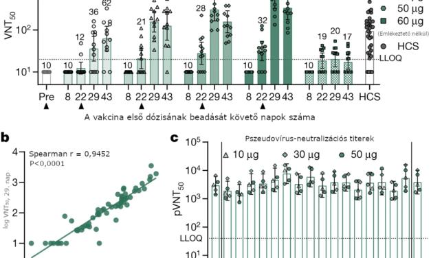 A BNT162b1 COVID19 vakcina humán antitest- és TH1 T-sejt-választ vált ki