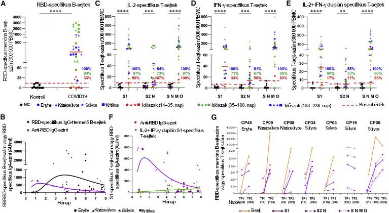 SARS-CoV-2-specifikus memória B- és T-sejt-válaszok COVID19-betegeknél